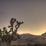 HDR Joshua Tree